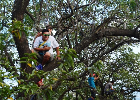 Guys in trees watching the parade.