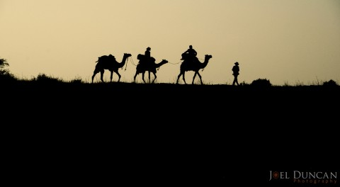 Camel-Safari-India